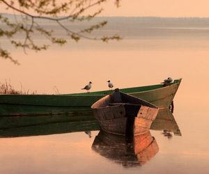 birds and boats image