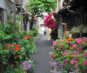 asia, awesome, and flowers image