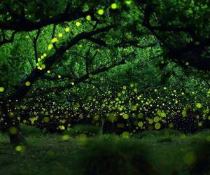fireflies, forest, and nature image