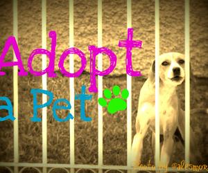adopt, blue, and fun image