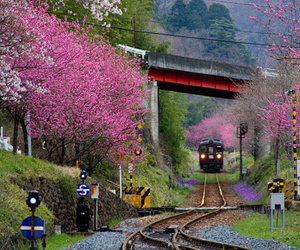 train, japan, and pink image
