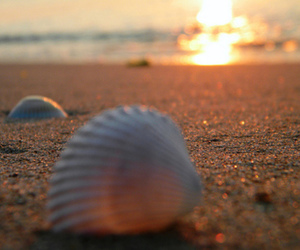 beach and shell image