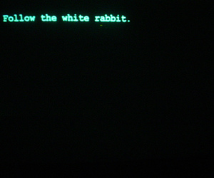 follow, rabbit, and white image