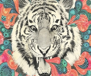 background, colors, and tiger image