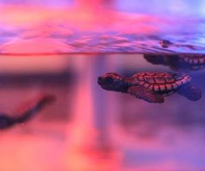 turtle, animal, and pink image