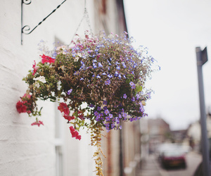 color, dark grunge, and flowers image