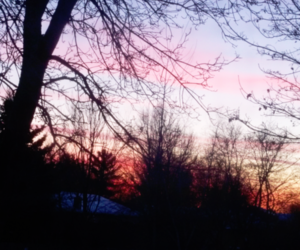 sunset, winter, and trees image