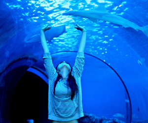 girl, blue, and aquarium image