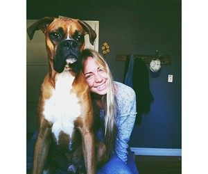 animals, boxer, and peace image