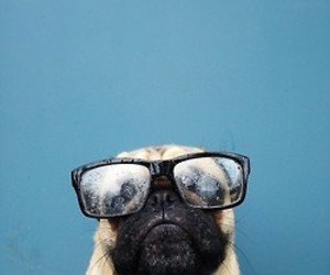 dog, glasses, and blue image