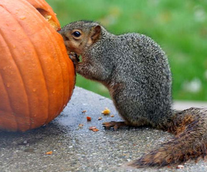 autumn, pumpkin, and eating image