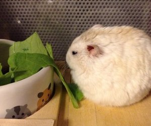 cute, hamster, and adorable image