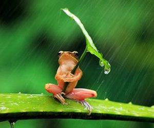 frog, rain, and animal image