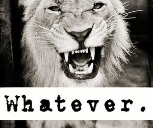 33 Images About Lion On We Heart It See More About Quote Lion