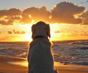beach, love, and beautiful image