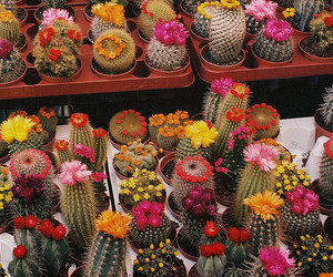 cactus, flowers, and nature image