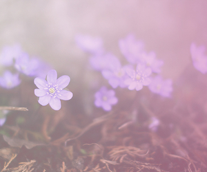 flower, lovely, and purple image