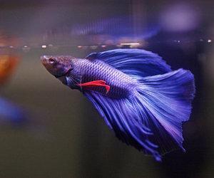 تفسير السمك في الحلم لابن سيرين معنى اكل السمك في المنام