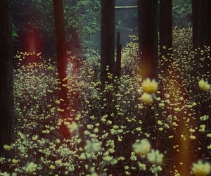 flowers, forest, and nature image