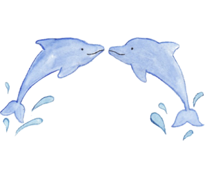 dolphins, transparents, and overlay image