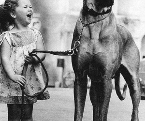 dog, great dane, and smile image