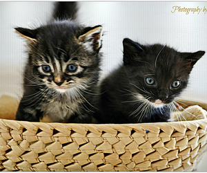 adorable, kitten, and basket image