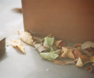 fall, leaf, and floor image