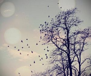 bird, tree, and sky image