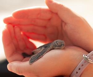 baby, hand, and nature image