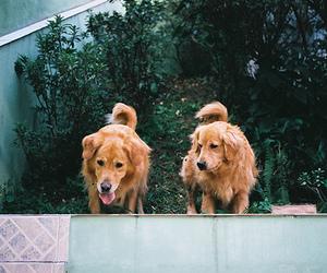 dog, vintage, and indie image