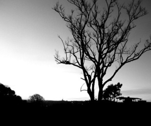 arbol, beautiful, and black and white image