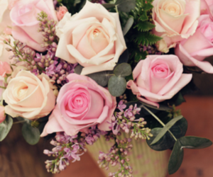 flowers, roses, and pink image