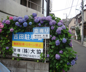 flowers, japan, and pale image