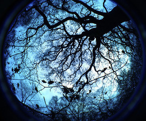 tree, blue, and photography image
