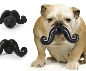 dog, mustache, and moustache image