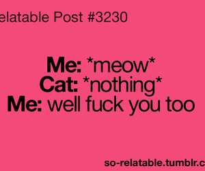 animal, cat, and meow image