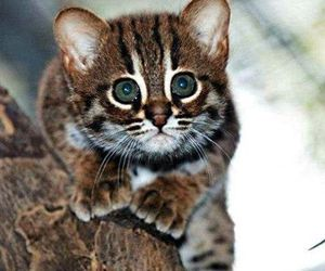 cute, kitten, and cat image