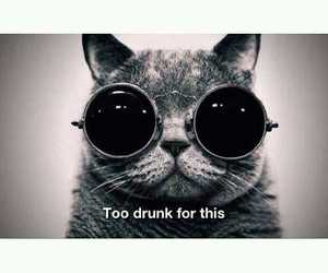 cat, quotes, and sunglasses image
