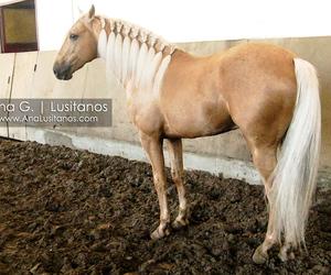 horse, stallion, and azeitona image