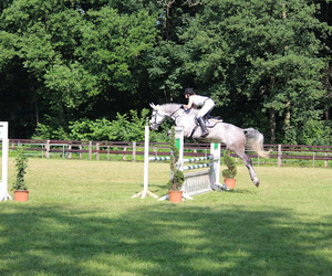 competition, equestrian, and horse image