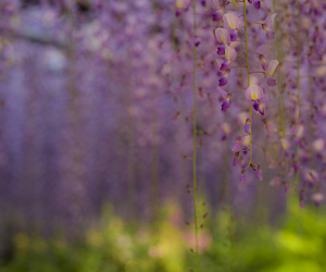 beautiful, bokeh, and flowers image