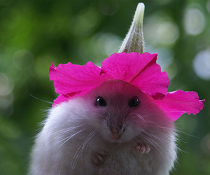 flowers, cute, and mouse image
