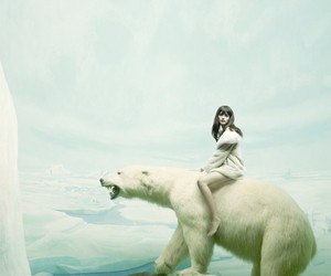 bear and white image