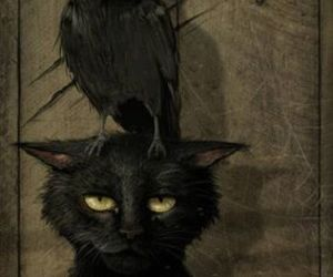 cat, crow, and black image
