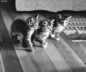 black and white, cats, and lovely image