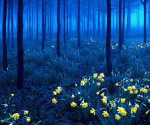 forest, flowers, and blue image