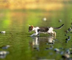 kitten and water image