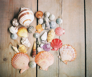 shell, sea, and summer image