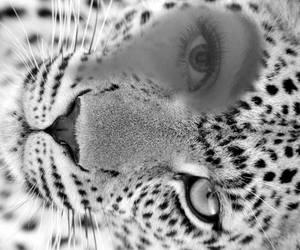 angry, animal, and beautiful image