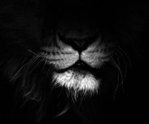 dark, lion, and night image